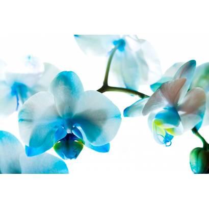 Фотообои Орхидея | арт.28358