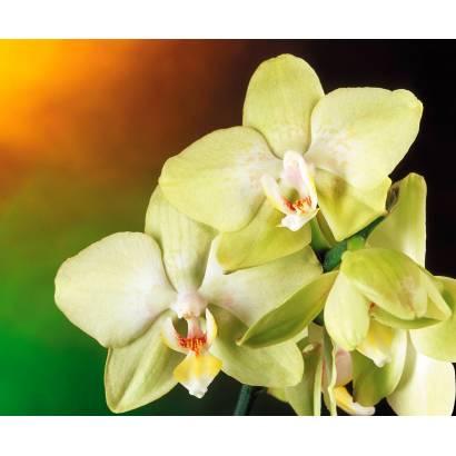 Фотообои Орхидея | арт.2836
