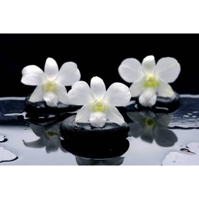 Фотообои Орхидея | арт.28360