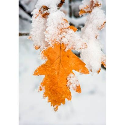 Фотообои Зима | арт.28368