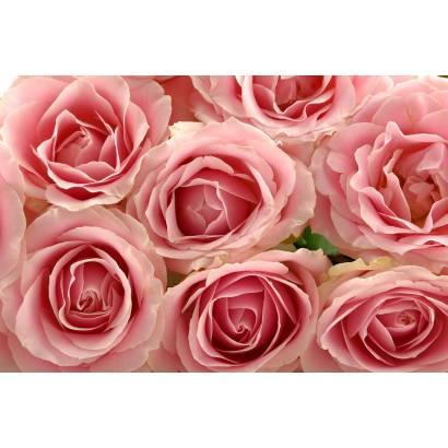 Фотообои Розы | арт.28369