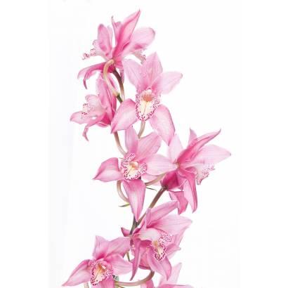 Фотообои Орхидея | арт.28374