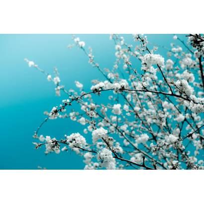 Фотообои Весна | арт.28375