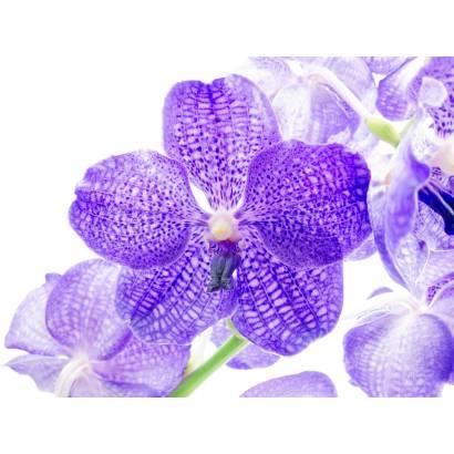 Фотообои Цветок | арт.28376