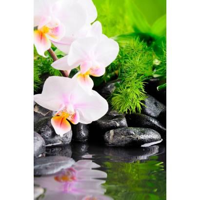 Фотообои Орхидея | арт.28378