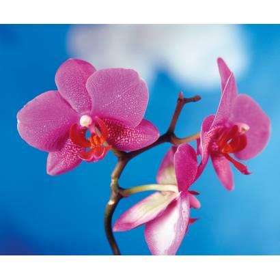 Фотообои Орхидея | арт.2838