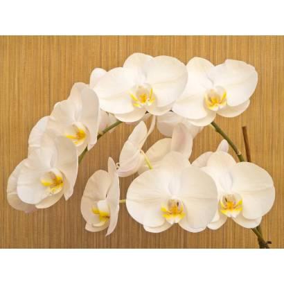 Фотообои Орхидея | арт.28394