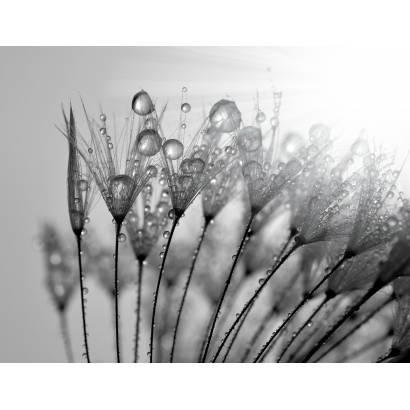 Фотообои Цветы | арт.28395