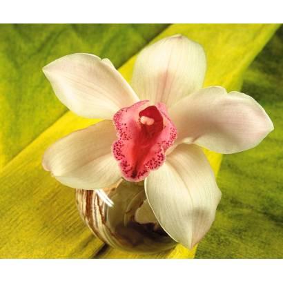 Фотообои Орхидея | арт.284