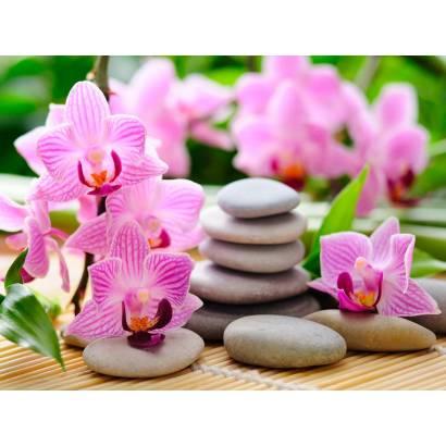 Фотообои Орхидея | арт.28400