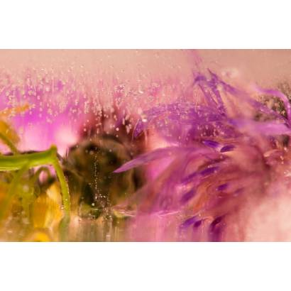 Фотообои Цветы   арт.28406