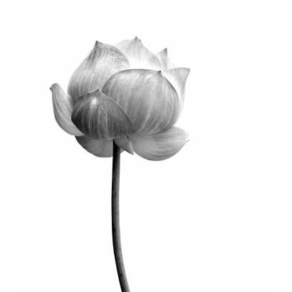 Фотообои Цветы | арт.28408
