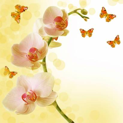 Фотообои Орхидея | арт.28413