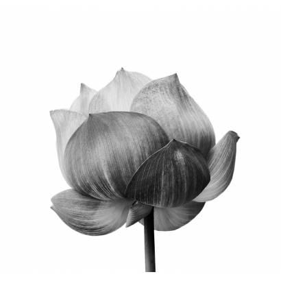 Фотообои Цветы   арт.28415