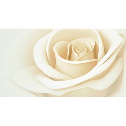 Фотообои Розы | арт.28417
