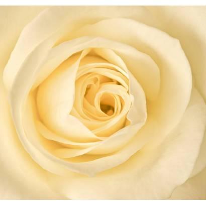 Фотообои Розы | арт.28419