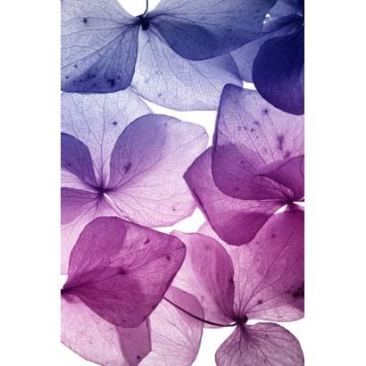 Фотообои Цветы   арт.28420