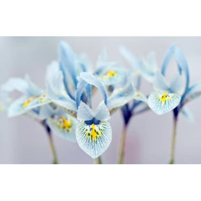 Фотообои Цветы | арт.28421