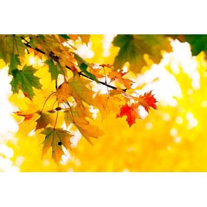 Фотообои Осень | арт.28422