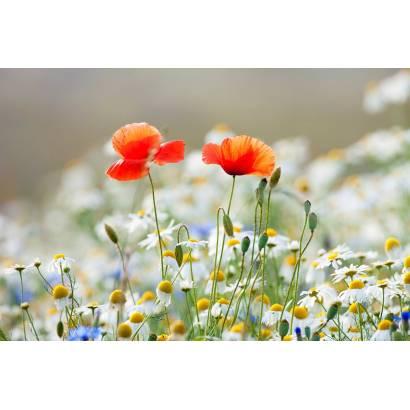 Фотообои Полевые Цветы | арт.28427