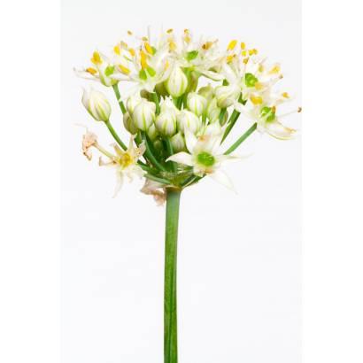 Фотообои Цветы | арт.28439