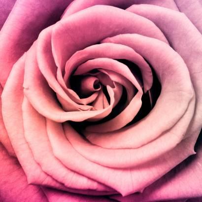 Фотообои Бутон розы | арт.28441
