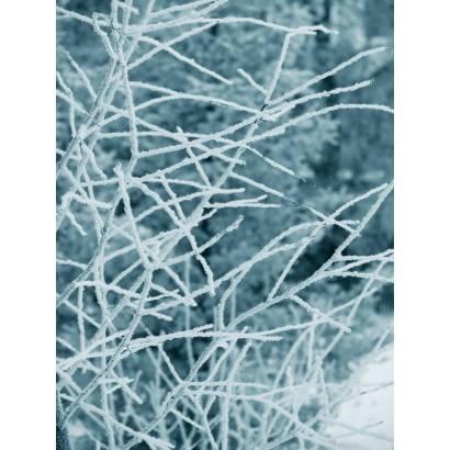 Фотообои Зима | арт.28454