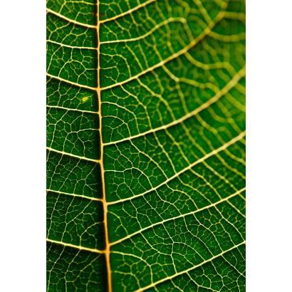 Фотообои Листья | арт.28458
