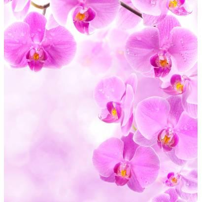 Фотообои Pink Орхидея | арт.28470