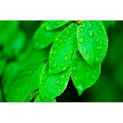 Фотообои Сочные листья | арт.28472