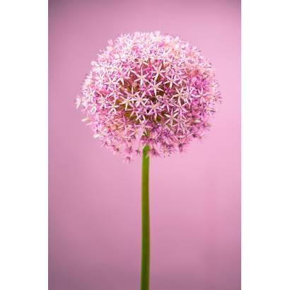 Фотообои Цветочный шар | арт.28479
