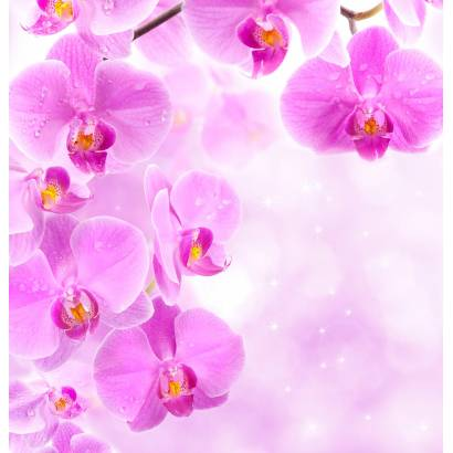 Фотообои Розовые орхидеи | арт.28480