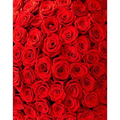 Фотообои Розы | арт.28482