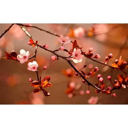 Фотообои Цветущая вишня | арт.28483