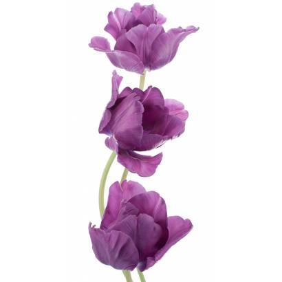 Фотообои Фиолетовые цветы | арт.28485