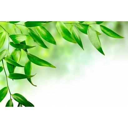 Фотообои Зеленые листья | арт.28488