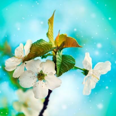 Фотообои Яблоневый цвет | арт.28500