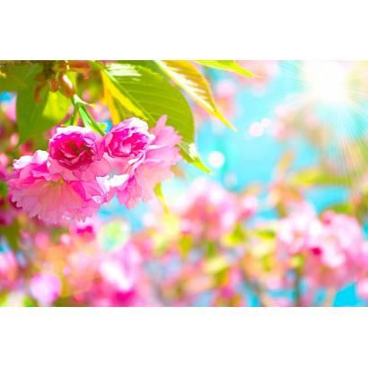 Фотообои Весенние цветы | арт.28504