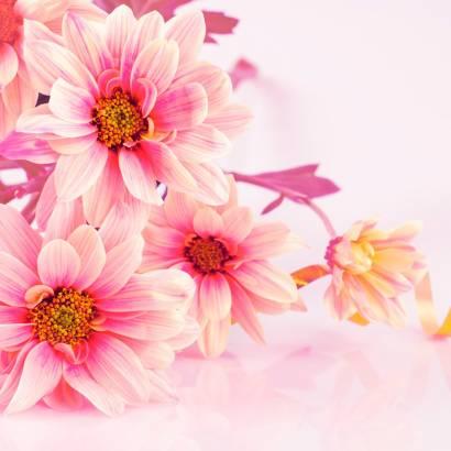 Фотообои Весенние Цветы | арт.28508