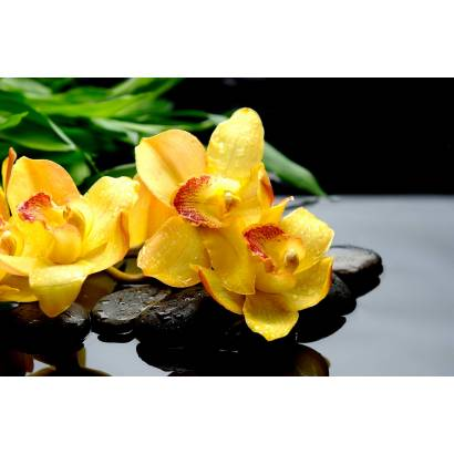Фотообои Желтые Орхидеи | арт.28516