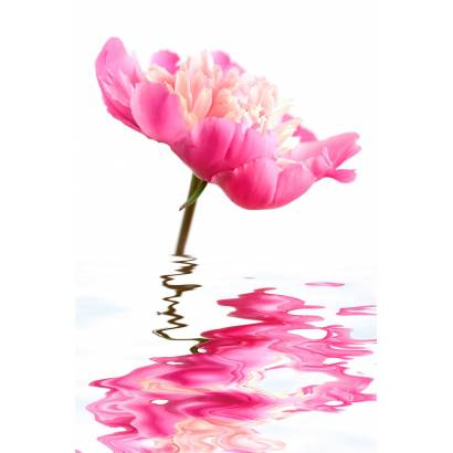 Фотообои Цветок в воде | арт.28520
