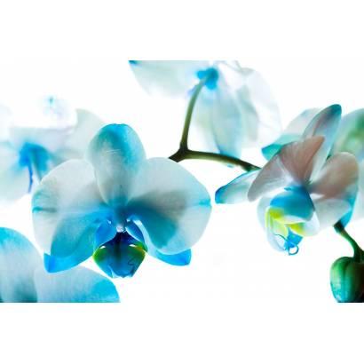 Фотообои Орхидея Голубая | арт.28526