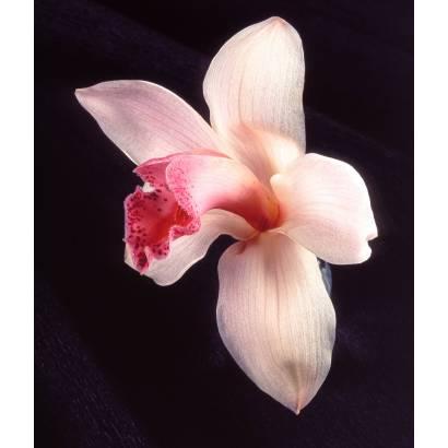 Фотообои Орхидея | арт.2853
