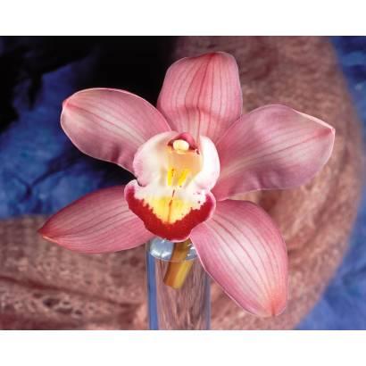 Фотообои Орхидея | арт.2854