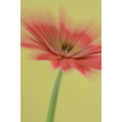 Фотообои Оригинальный Цветок | арт.28545