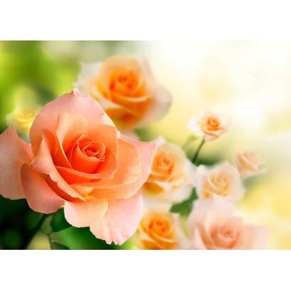Фотообои Розы | арт.28556