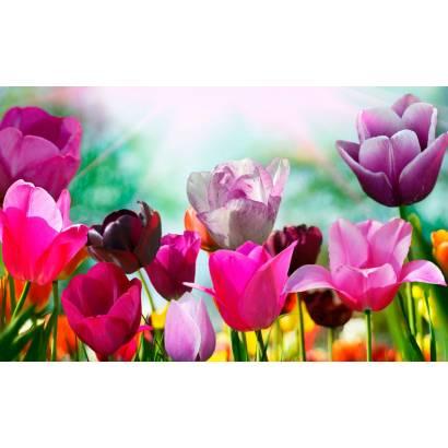 Фотообои Тюльпаны | арт.28560