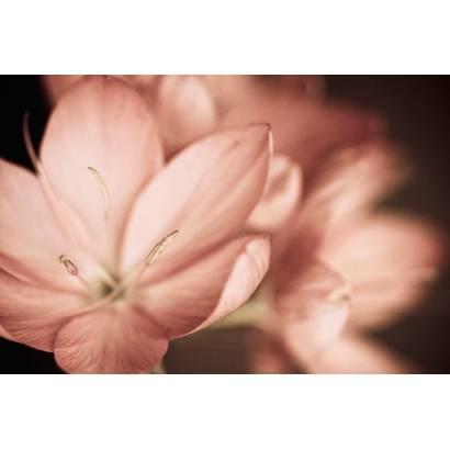 Фотообои Сонная лилия | арт.28565