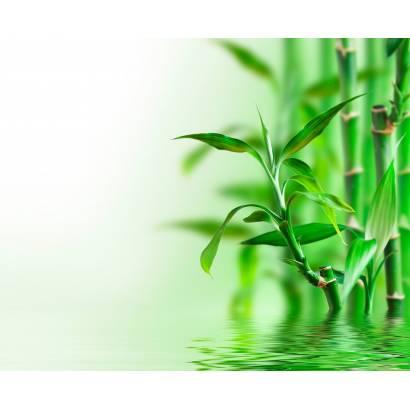 Фотообои Бамбук в воде   арт.28580