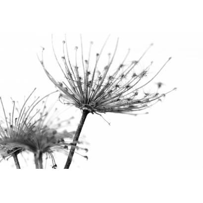 Фотообои Экзотичные Цветы | арт.28582